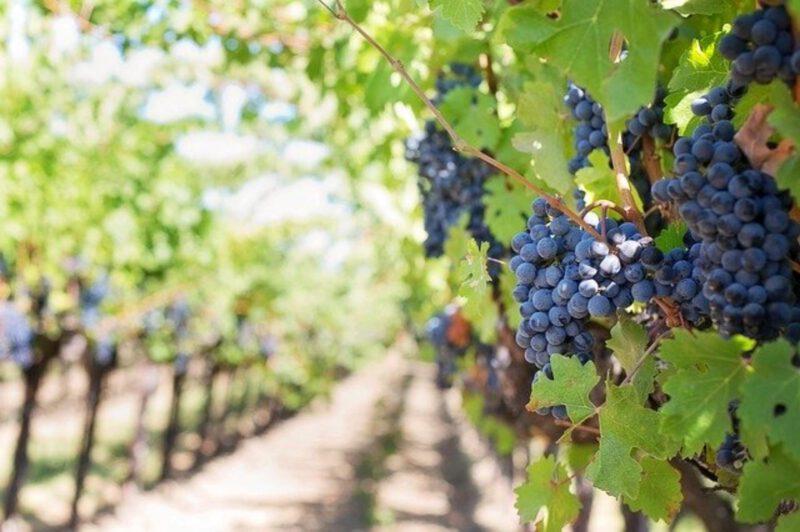 Turystyka winiarska